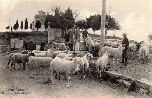 Sheep grazing in front of the Sanctuary